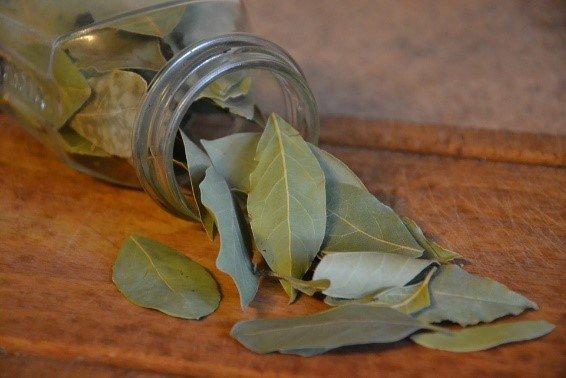bay laurel leaves herb
