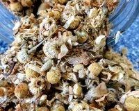 chamomile flowers herb