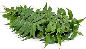 neem leaf herbal correspondences