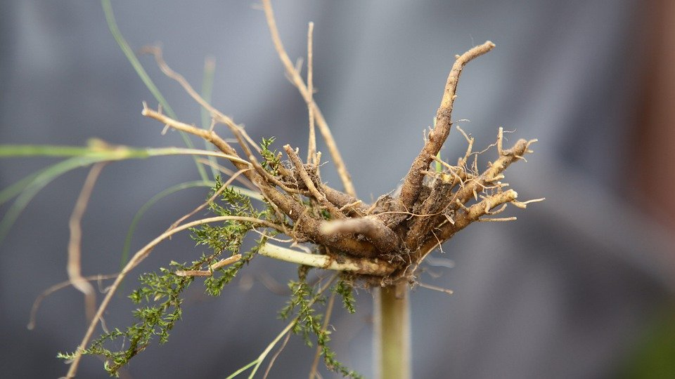 valerian root herbal correspondences